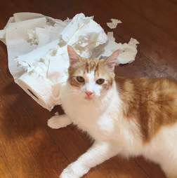 Cat with shredded paper towel