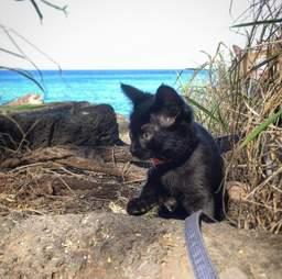 Adventure kitten on harness