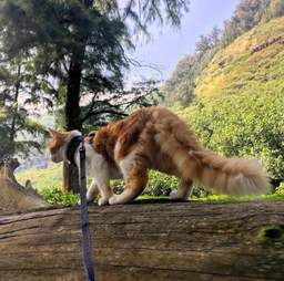 Adventure cat exploring log