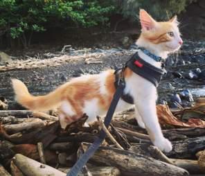 Adventure cat on harness