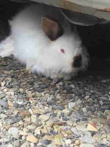 Rabbit underneath car