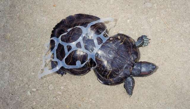Image result for turtle plastic