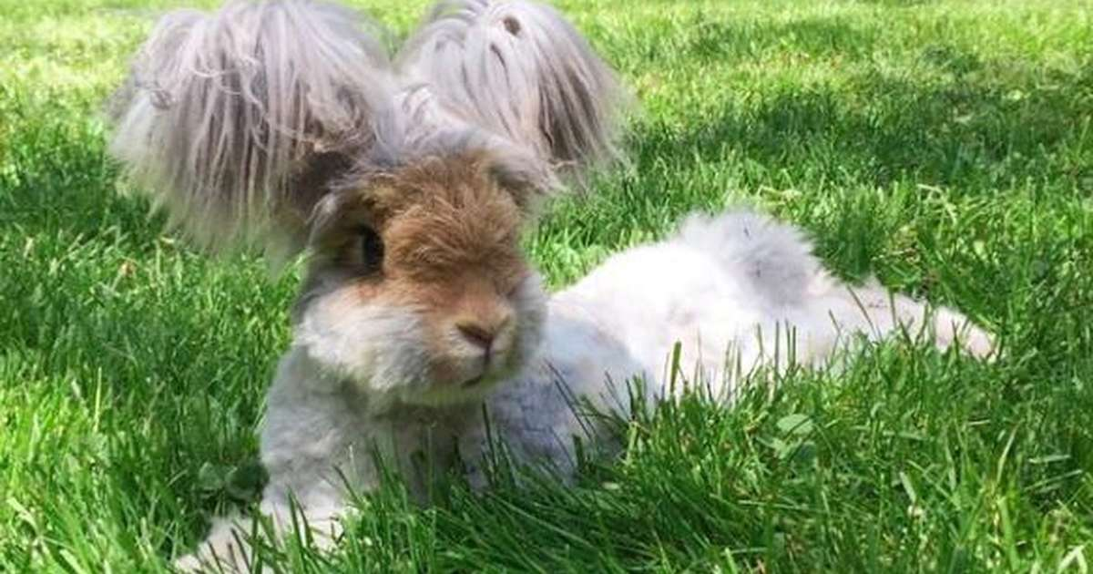 yes this impossibly adorable rabbit actually exists the