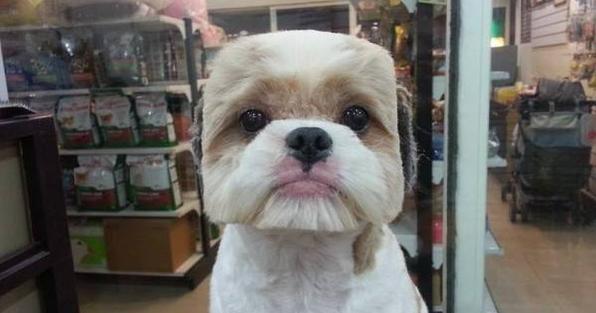 11 Weirdest Hairstyles For Dogs The Dodo