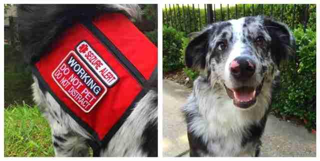 Epilepsy Assistance Dogs Uk