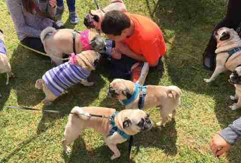 boy with autism has a pug party