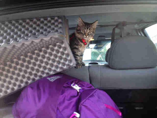 Wo Rescue Stray Cats And Take Them Hiking And Camping - The Dodo
