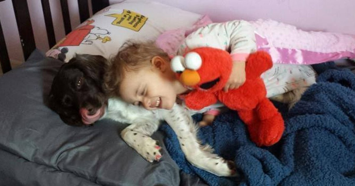 Dog Saves His Little Girls Life Every Single Day - The Dodo-7209