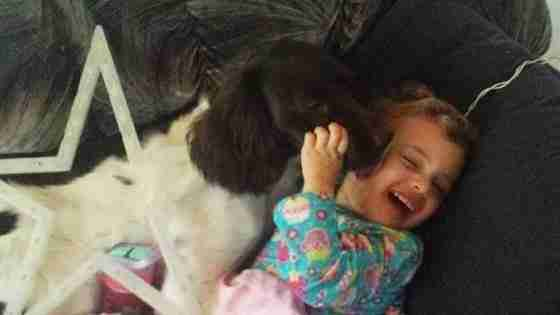 Dog Saves His Little Girls Life Every Single Day - The Dodo-3860