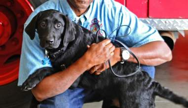 prisoners are training puppies to be service dogs  the dodo