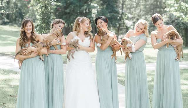 Bridesmaids Hold Rescue Puppies Instead of Flowers.