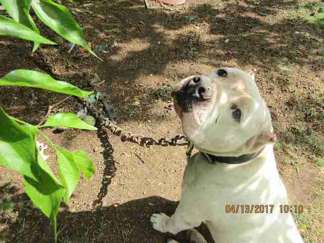 Dog tied to tree in Lancaster, Texas