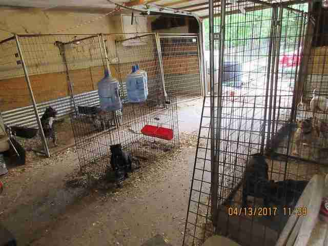 Cruel dog breeding operation in Texas garage