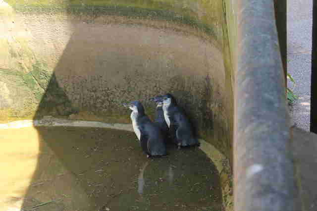 Penguins in empty pool