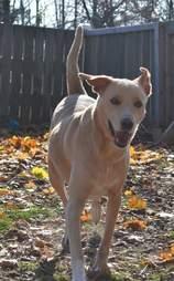 Shelter dog running in sun