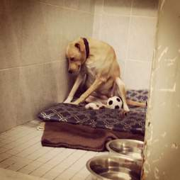 Shelter dog Lana was too sad to go on walks