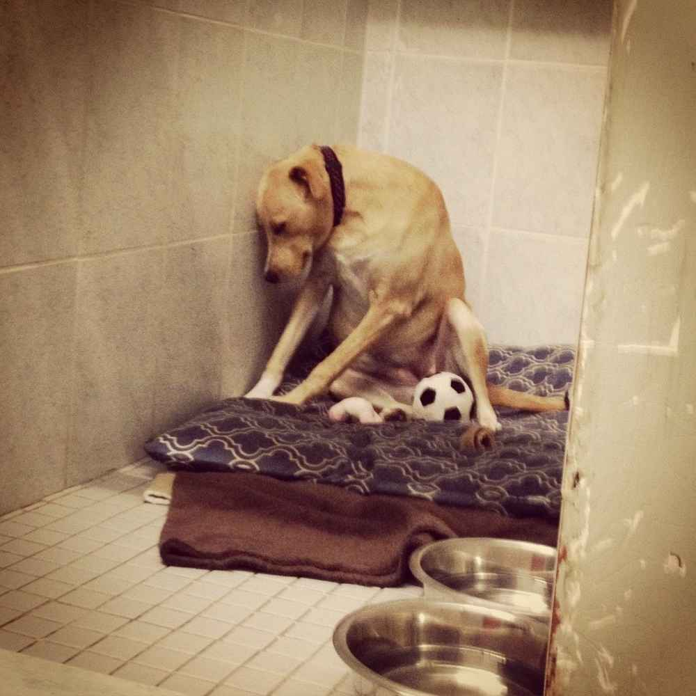 Saddest Dog In The World Dumped At Shelter Again Needs Urgent