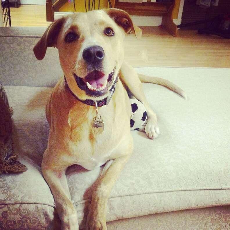 Saddest dog in world smiling