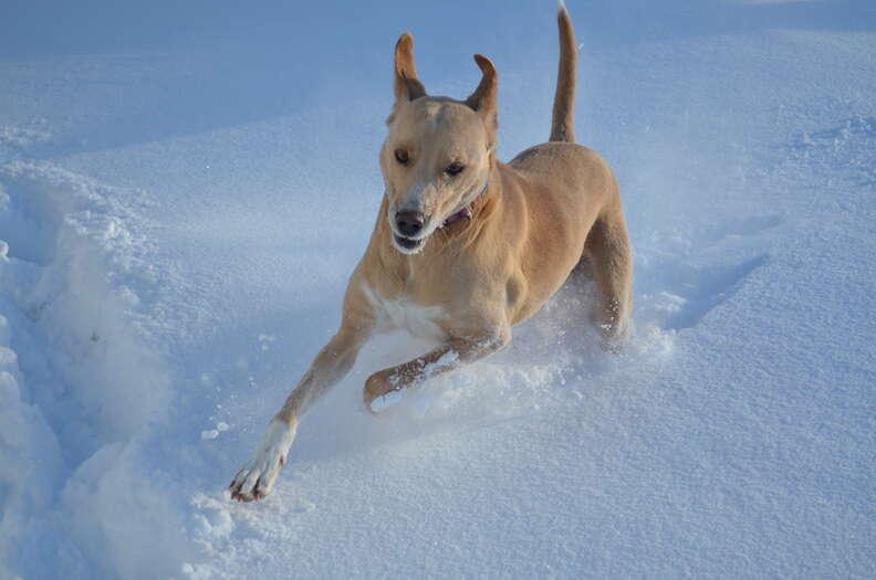 Shelter dog running