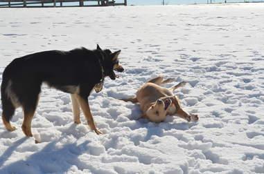 Shelter dog playing