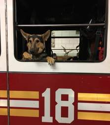 Puppy in fire truck