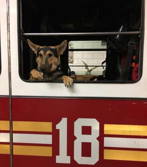 Puppy in fire truck