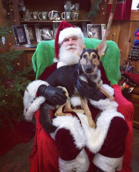 Dog on Santa's lap