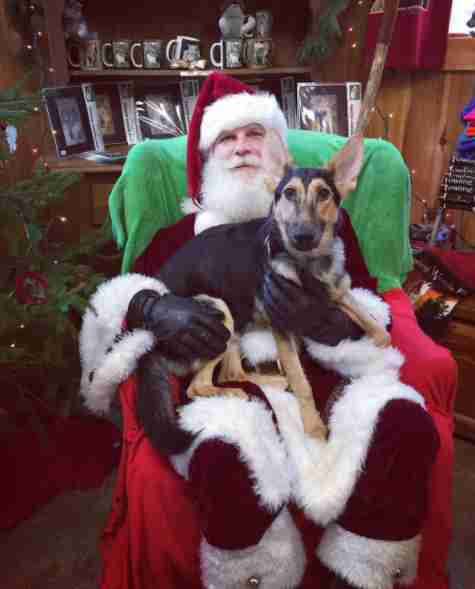 Dog on Santa's lap