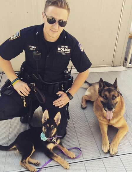 German shepherd puppy with NYPD canine unit