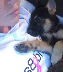 Woman holding German shepherd puppy
