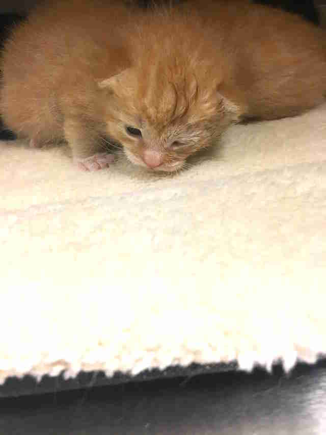Kitten opens eyes for first time at shelter