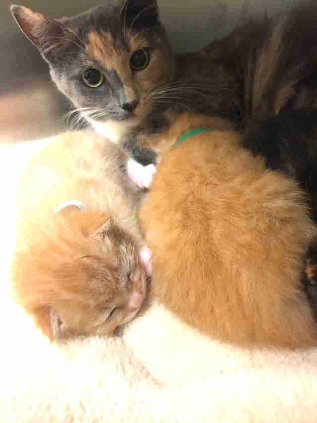 Cat mom with her kittens at Virginia shelter