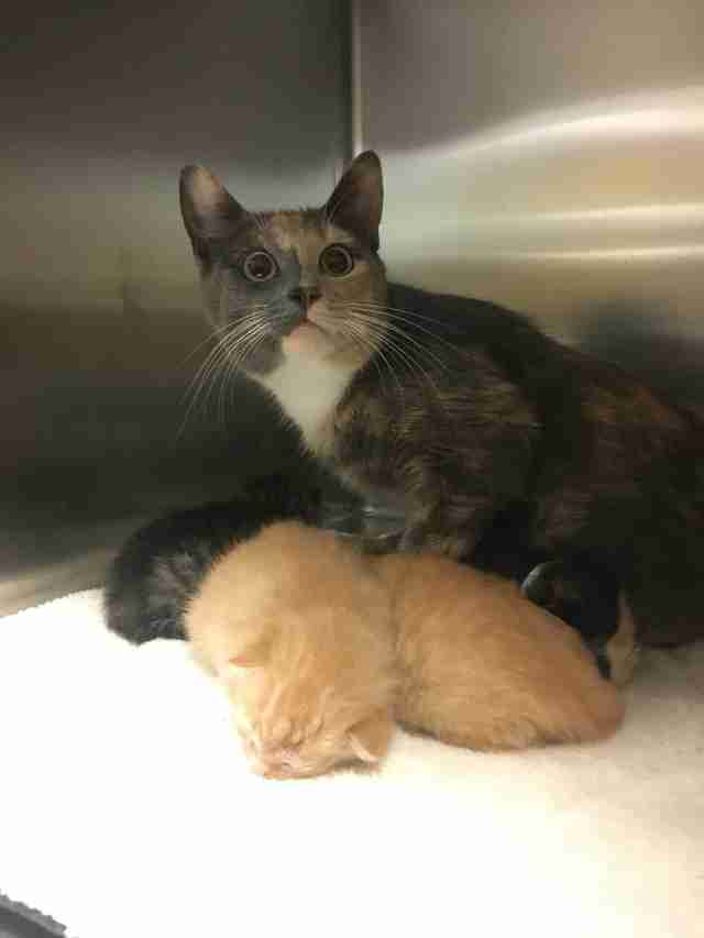 Cat family abandoned at shelter
