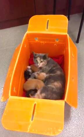 Cat family abandoned at Virginia shelter