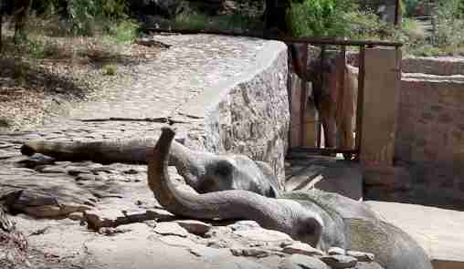 Mendoza zoo elephants reaching trunks out of pit