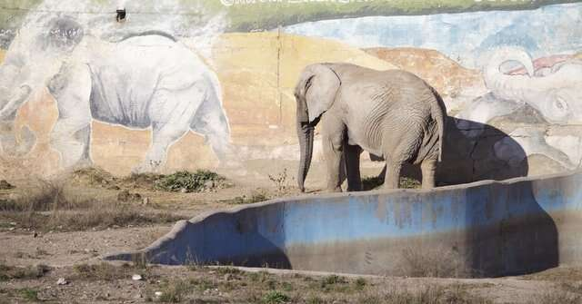 Elephant in concrete enclosure at Mendoza zoo