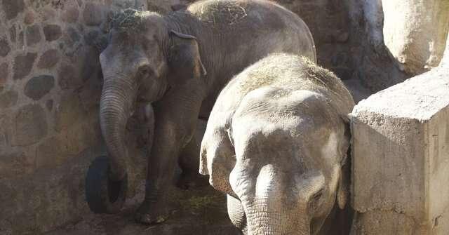 Mendoza zoo elephants in concrete pit
