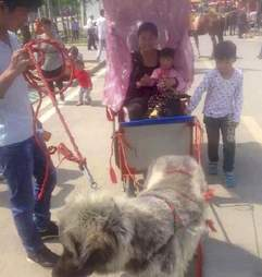 Dog pulling rickshaw in China