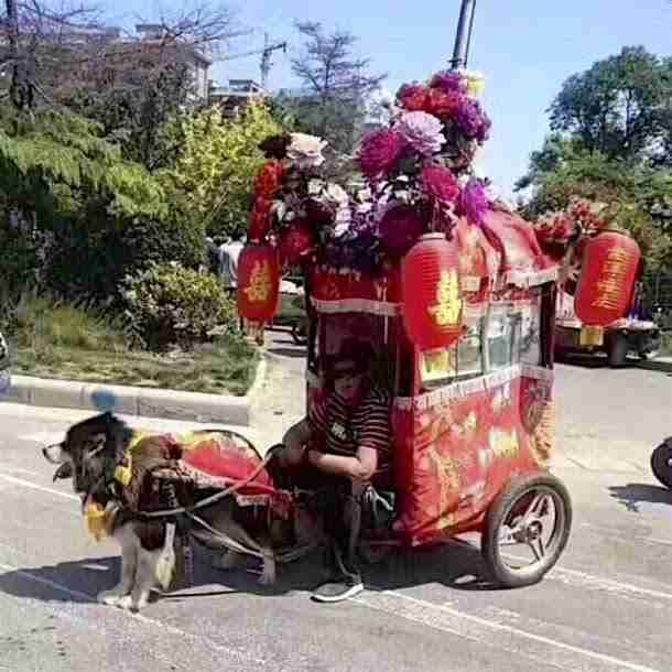 Dogs Forced To Drag Carts In China - The Dodo