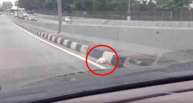Cat rescued on highway