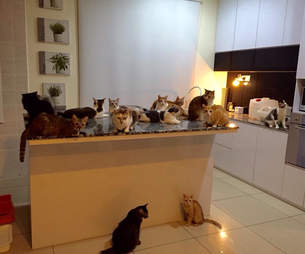 Group of rescued cats in kitchen
