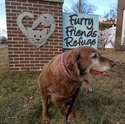 Senior dog at shelter