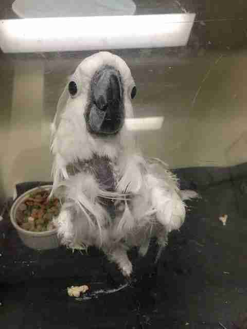 Rescued bird sick with lung cancer