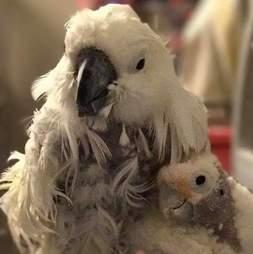 Rescued bird best friends