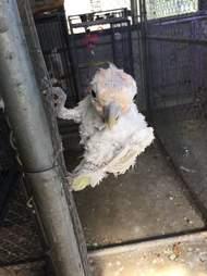 Bird at dilapidated refuge