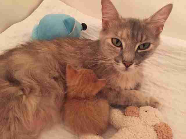 Grieving mother cat adopts orphaned kitten