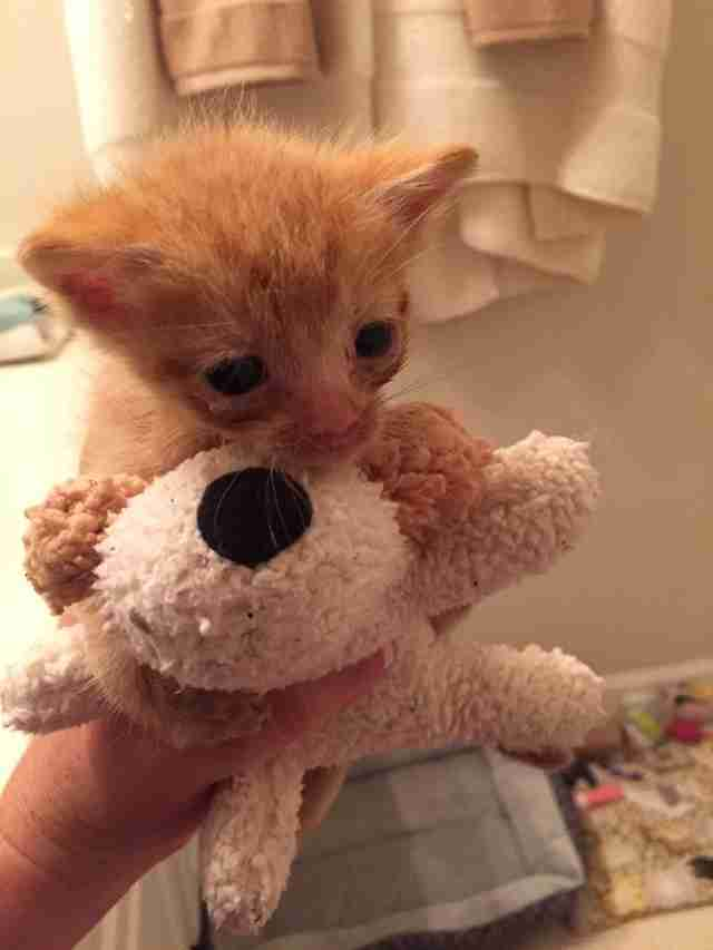 Orphaned kitten