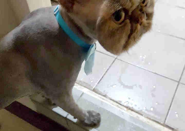Cat That Looks Like Beerus