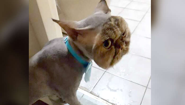 Cat S New Do Makes It Looks Like He S Wearing A Cat Mask