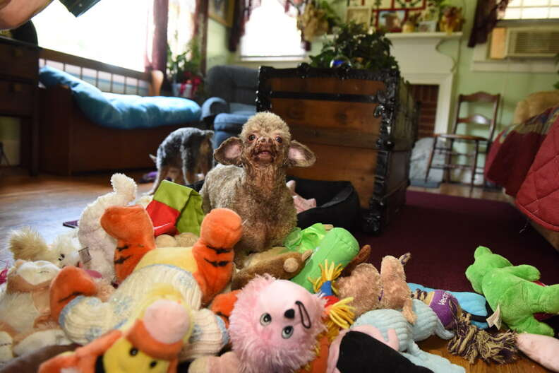 Rescue dog with her stuffed animals